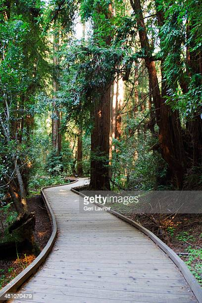 muir woods national monument, california - muir woods stock photos and pictures