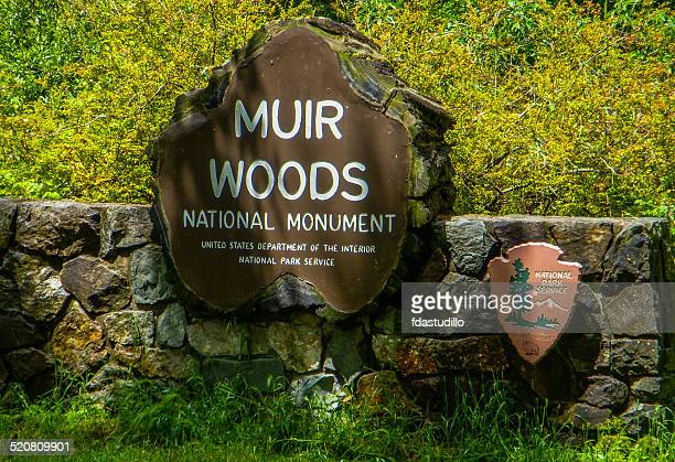 muir woods national monument - california - muir woods stock photos and pictures