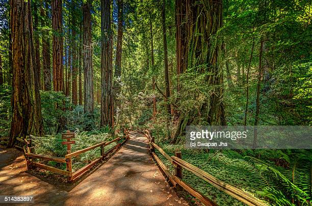muir woods - muir woods stock photos and pictures