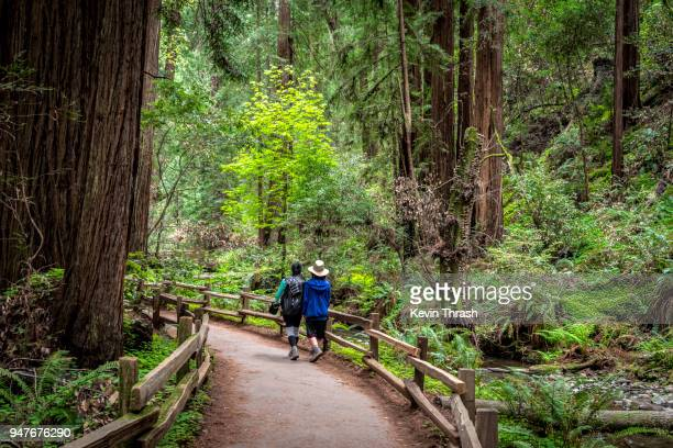 muir woods redwood creek trail hikers - muir woods stock photos and pictures