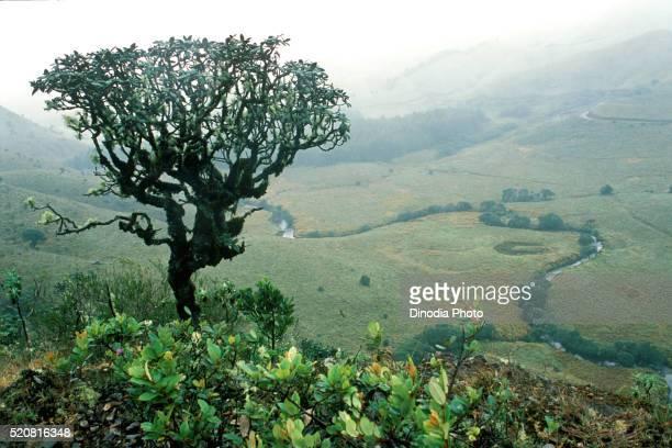mukurthi national park, ooty, ootacamund, udhagamandalam, nilgiris, tamil nadu, india - national park stock pictures, royalty-free photos & images
