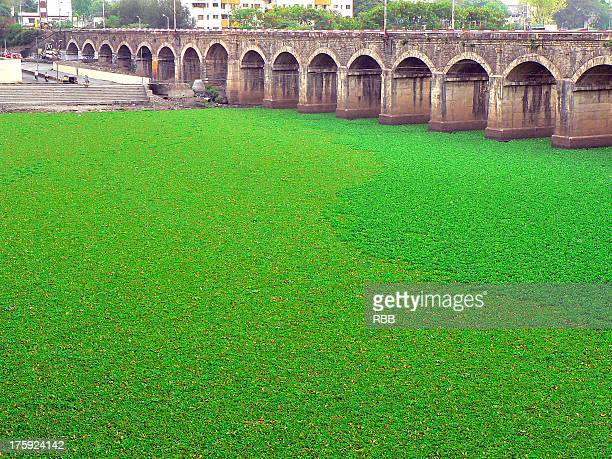 Mula River covered with Water hyacinth, Pune