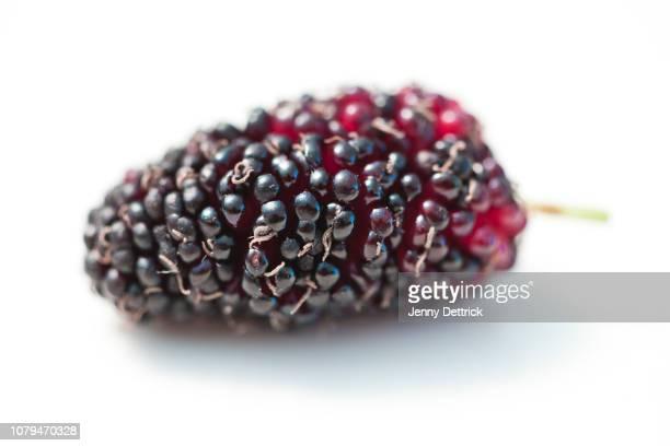 mulberry - マルベリー ストックフォトと画像