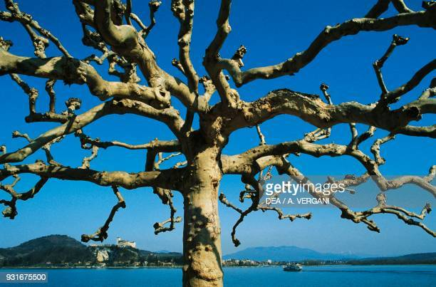 Mulberry tree branches on the Arona lakeside with the Angera fortress in the background Lake Maggiore Piedmont Italy