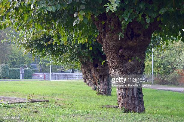 mulberry trees on grass landscape - mulberry tree stock pictures, royalty-free photos & images