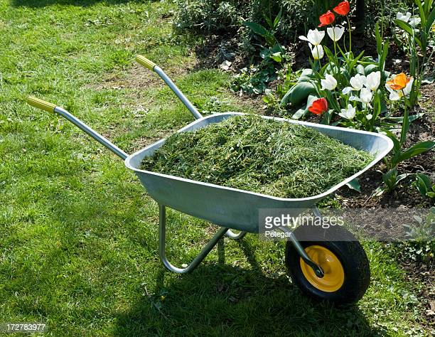 mulching in the garden - mulch stock pictures, royalty-free photos & images