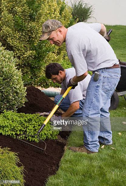 mulching - mulch stock pictures, royalty-free photos & images