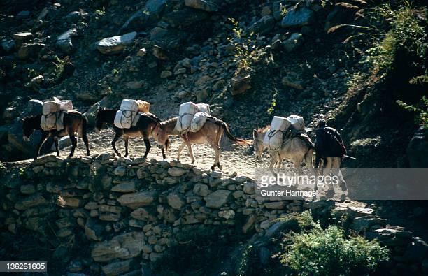 Mule caravan in himalayas