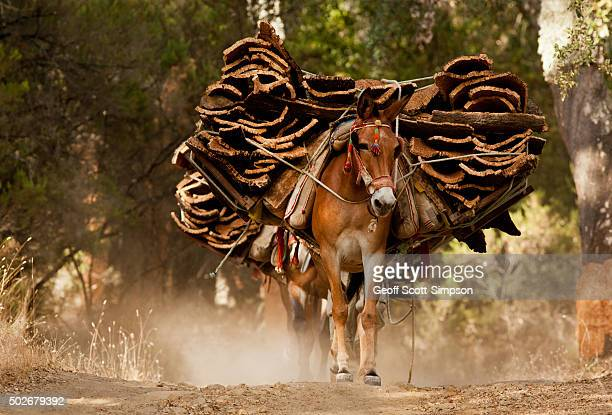 mule carrying cork bark - cork tree stock photos and pictures