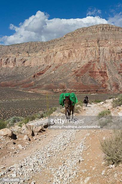 A mule carrying luggage in Supai