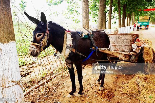Mule cart at a roadside, Zhigou, Shandong Province, China