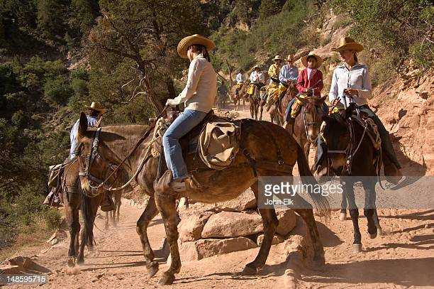 Mule ride into canyon, Bright Angel Trail.