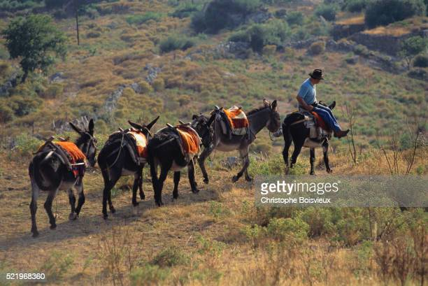 Mule Train, Balagne