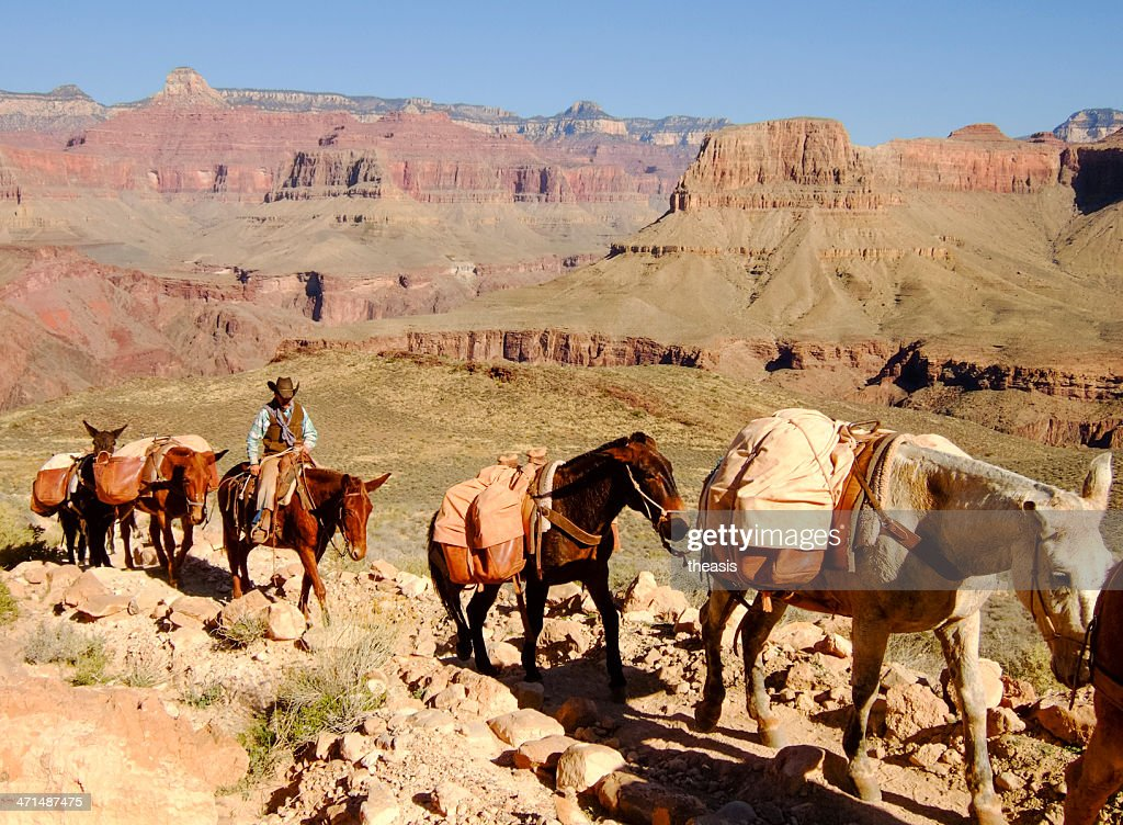 Mule Train in the Grand Canyon : Stock Photo