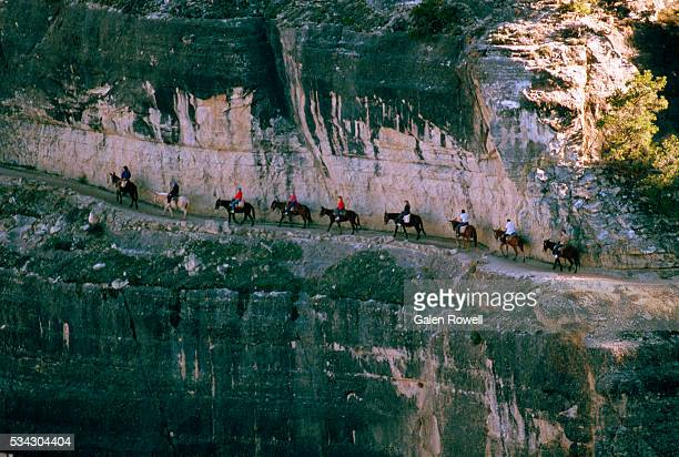 Mule Train of Grand Canyon Visitors