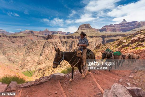Mule transport on the South Kaibab trail