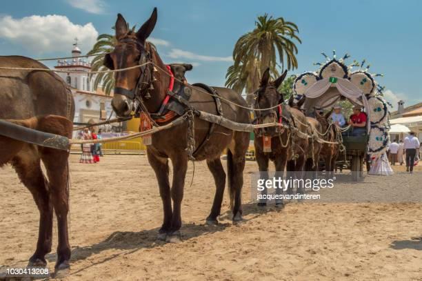 mule-drawn cart in the streets of el rocio, spain. - mula imagens e fotografias de stock
