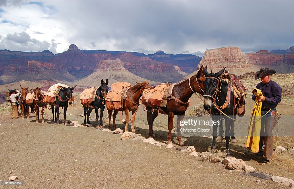 Mule train at the Tipoff, Grand Canyon : News Photo