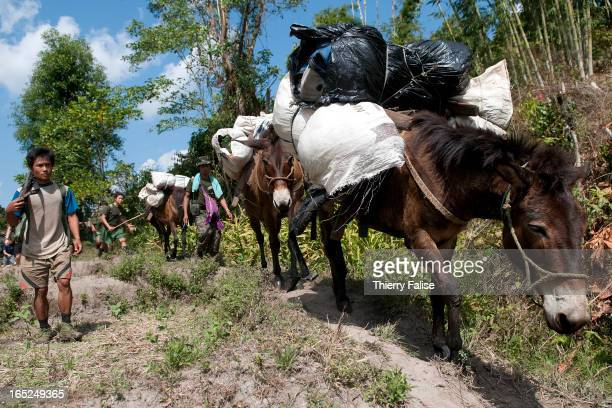 Mules carry loads during an expedition of the relief group Free Burma Rangers The FBR is a group constituted of volunteers from ethnic minorities...