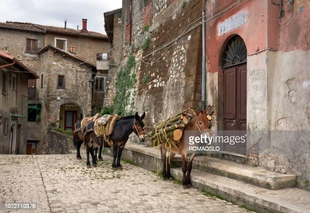 mules carrying firewood in artena, lazio italy - mula imagens e fotografias de stock