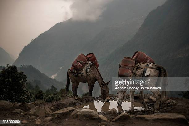 mules on village path in phakding, nepal himalaya - foothills stock pictures, royalty-free photos & images