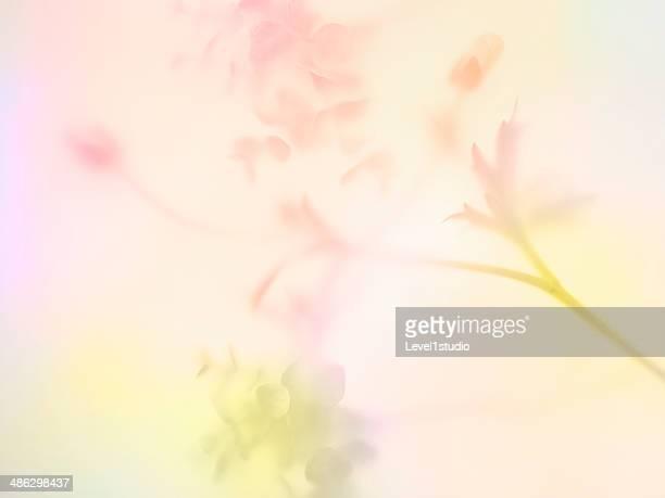 multi colored abstract background of the flower - pastellfarbig stock-fotos und bilder