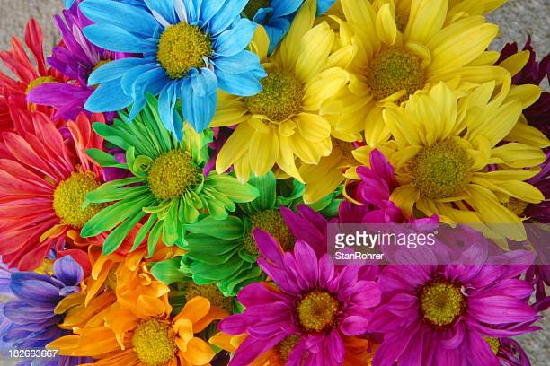 Multi Colored Daisies to Brighten Your Day, Daisy