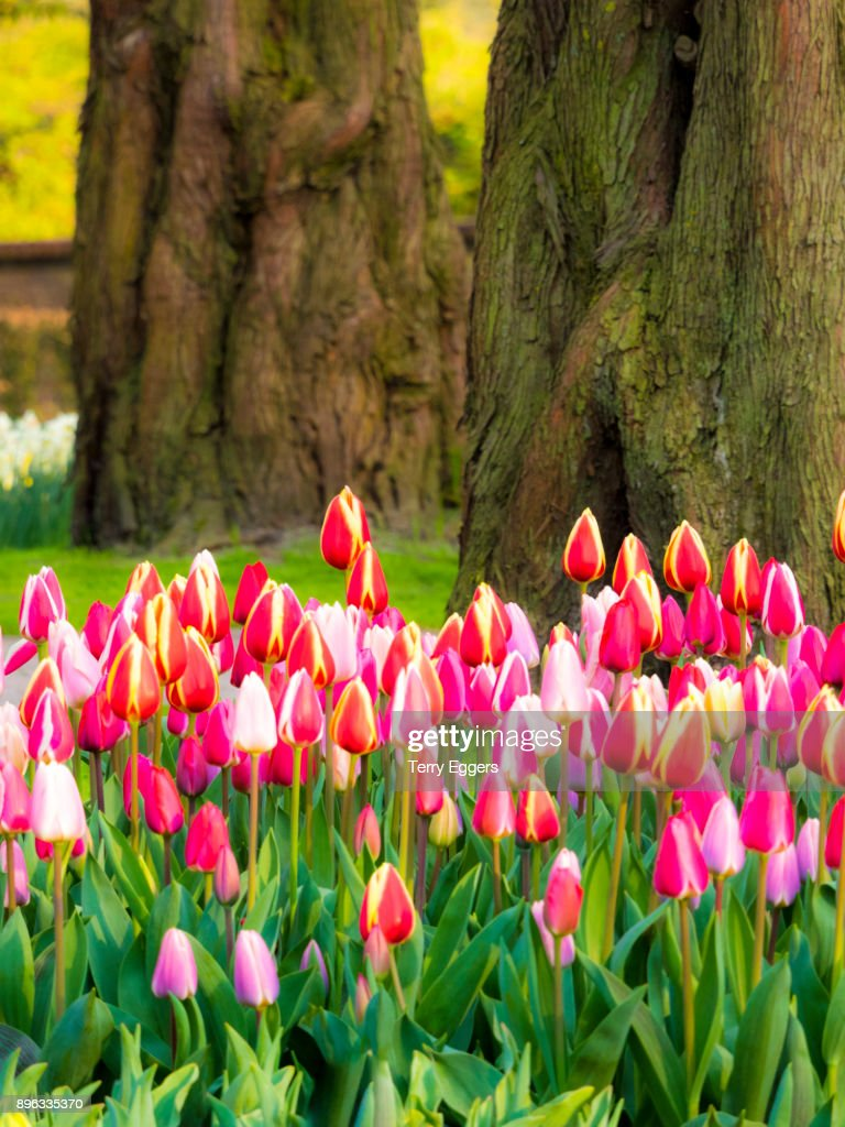Multi Colored Flowers In Spring Bloom Stock Photo Getty Images