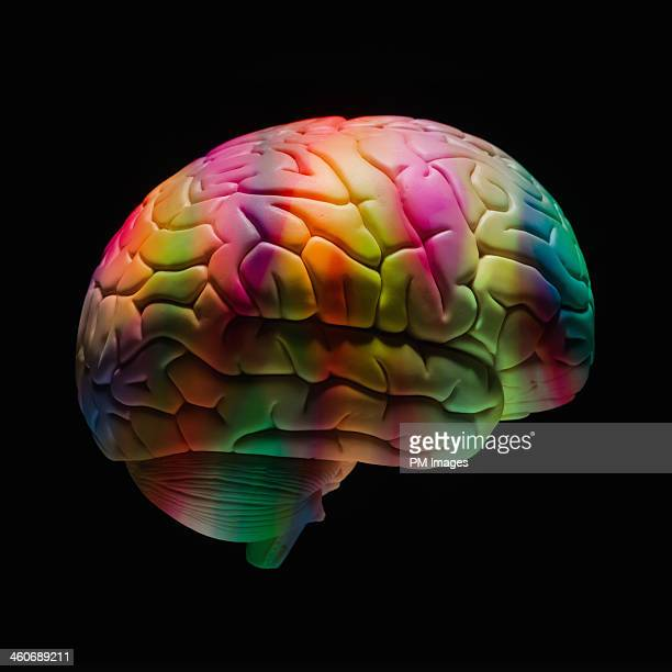Multi colored human brain