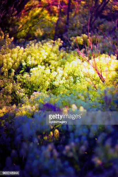 Multi colored nature scene