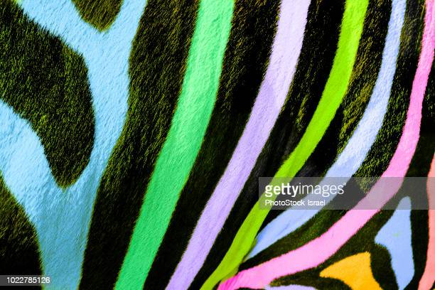 multi colored painted zebras - zebra stock-fotos und bilder