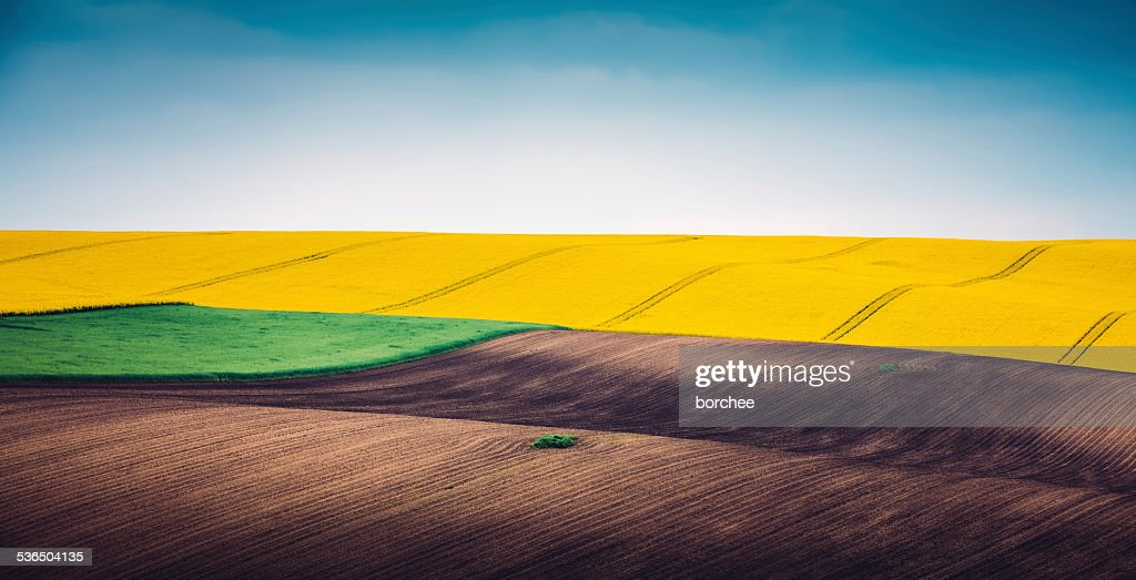 Multi Colored Panoramic Spring Field : Stock Photo