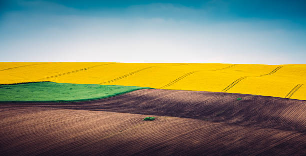 Multi Colored Panoramic Spring Field Wall Art