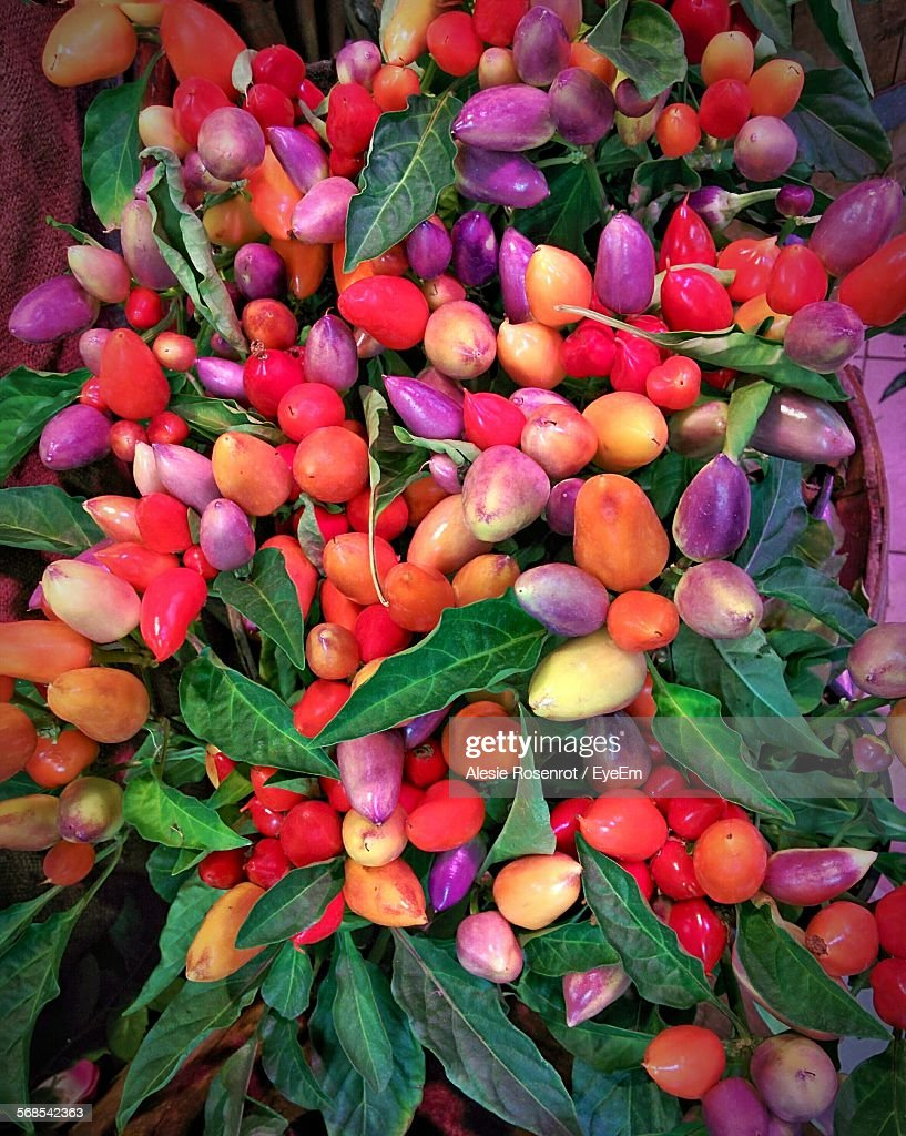 Multi Colored Peppers For Sale In Market : Stock Photo