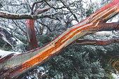 Multi coloured Tree in the snow