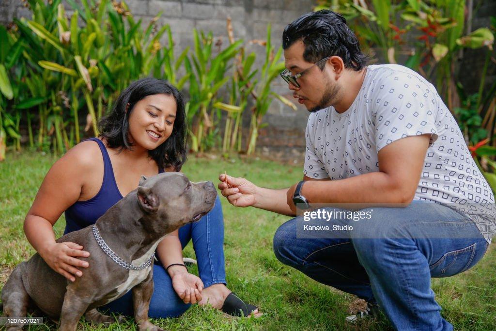 彼らのアメリカのブルドッグのペットを訓練する多民族のカップル : ストックフォト