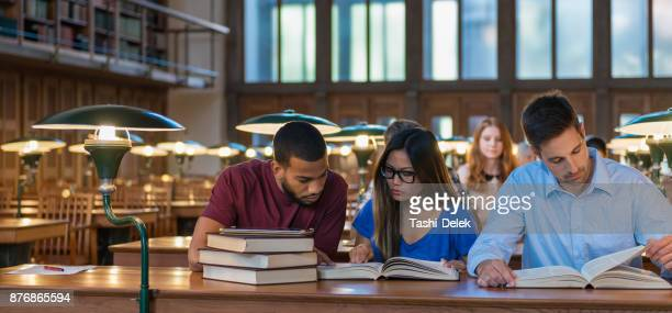 multi ethnic students studying in a library - estudar imagens e fotografias de stock
