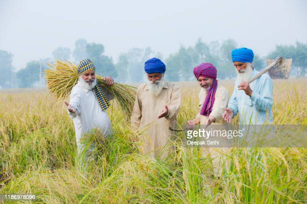 multi generation family in agriculture filed - stock photos - punjab - india stock pictures, royalty-free photos & images