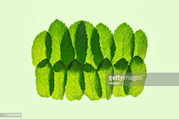 multi layered transluscent green mint leaves - back lit stock pictures, royalty-free photos & images