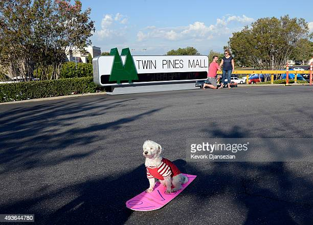 A multi poodle dog named 'Einstein' pose sitting on a hoverboard in front of 'Twin Pines Mall' named for the 'The Back To The Future' day event in...