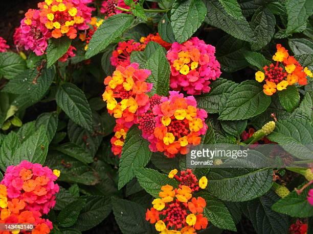 multi-color flowers - mazzi fiori di campo foto e immagini stock