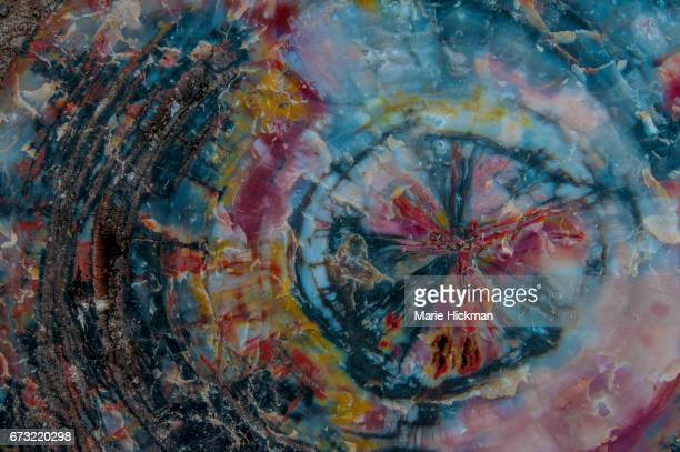 multi-colored abstract pattern from a petrified tree turned into quartz - petrified wood stock pictures, royalty-free photos & images