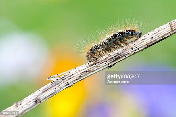 Multi-colored caterpillar