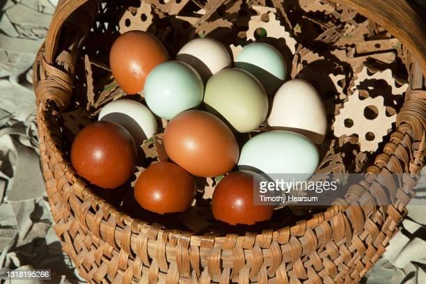 multi-colored chicken eggs in an antique basket - timothy hearsum photos et images de collection