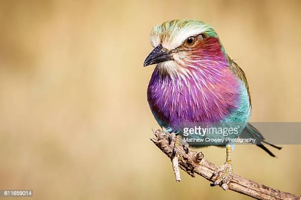 Multicolored Dream Bird