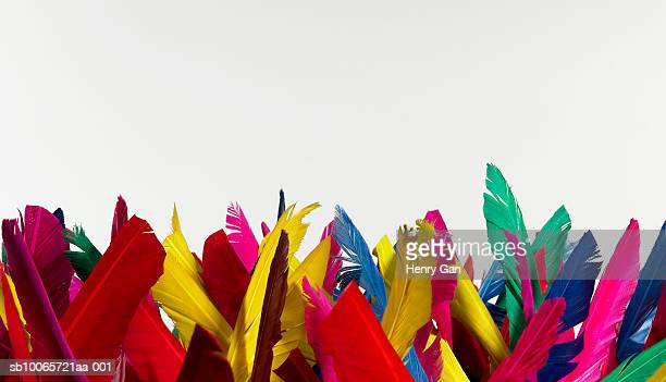 Multicolored feathers on white background