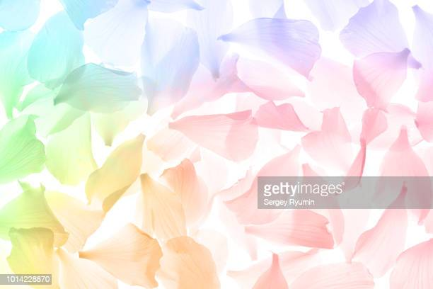 multi-colored flower petals as an abstract background - blumenmuster stock-fotos und bilder