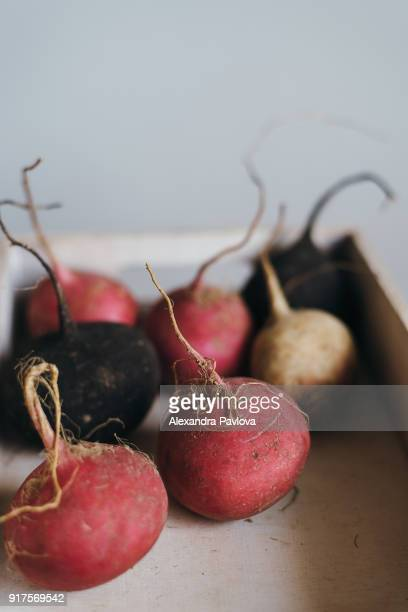 Multi-colored fresh turnips in a crate