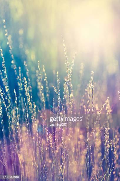 Mehrfarbiges Gras Hintergrund