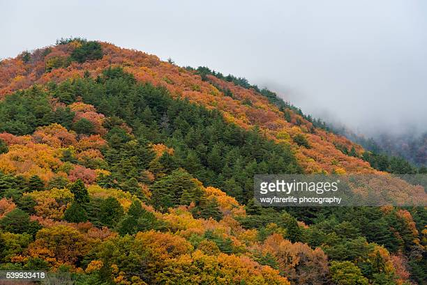 Multicolored maple trees on mountain